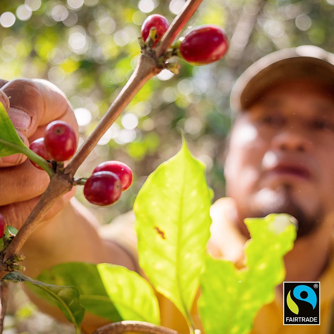 Wanneer zijn koffiebonen Fairtrade | KoffiePartners